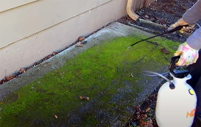 Getting Moss Off Concrete